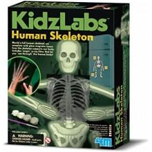 Glow Human Skeleton